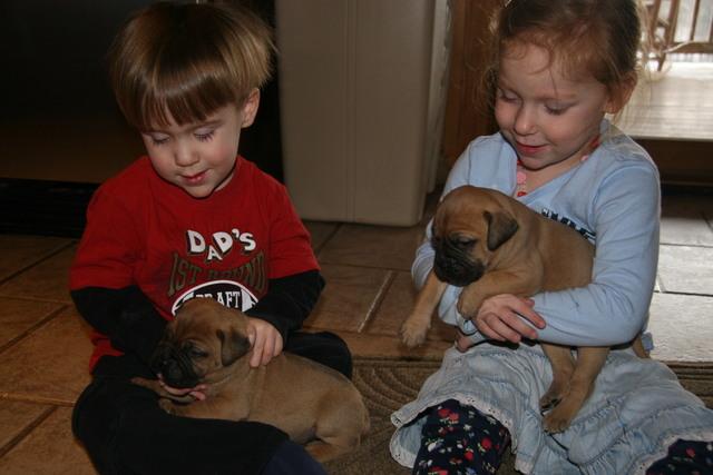 puppies010